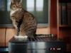 Dank der Abdeckung kann die Katze gefahrlos auf dem spielenden CD-Player sitzen